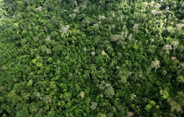 """Walt Disney Company vuole diventare """"carbon neutral"""". E investe nelle foreste"""