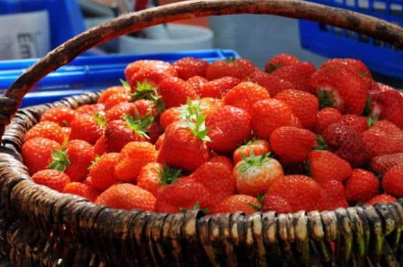 OGM: soltanto cinque Paesi europei utilizzano il transgenico in agricoltura