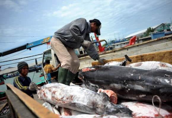 Squali a rischio di estinzione: colpa della pesca eccessiva