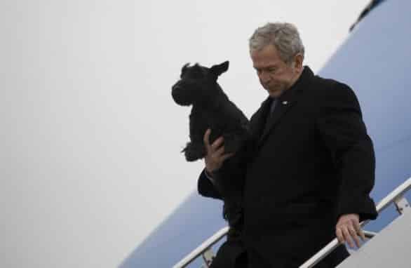 Storie di cani famosi: dal bassotto candidato alle presidenziali agli eroi dell'11 settembre