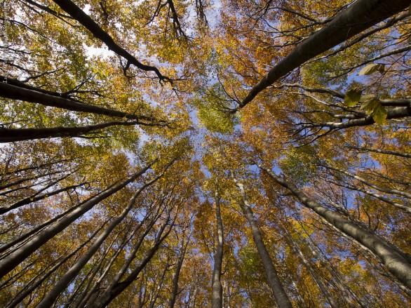 21 marzo: la Giornata Internazionale delle Foreste nel primo giorno di primavera