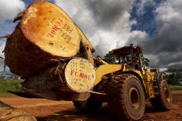 Australia: fallita la più grande compagnia di legname dell'emisfero sud