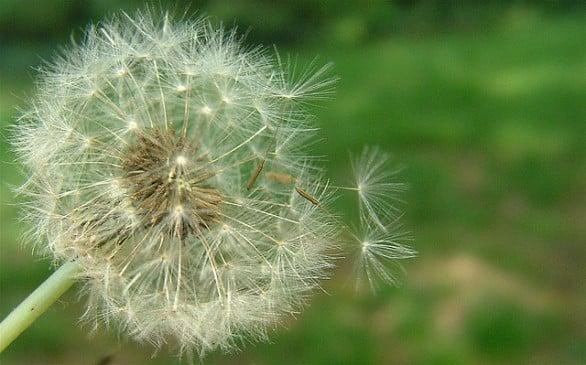 Le allergie primaverili nei bambini: come proteggerli e quali sono i sintomi