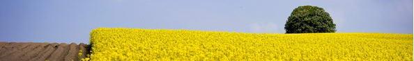 I Biostimolanti, nuovi scenari per il futuro dell'agricoltura