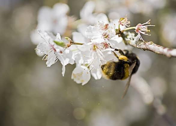 Allergie: cos'è il bollettino pollinico e dove si può consultare