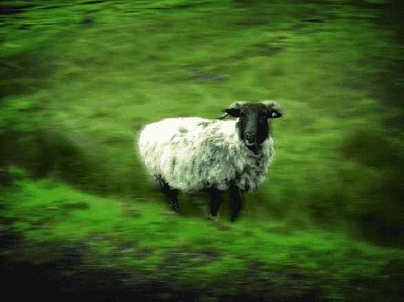 Carne di pecora vietata venduta in Francia, nessun pericolo per l'Italia