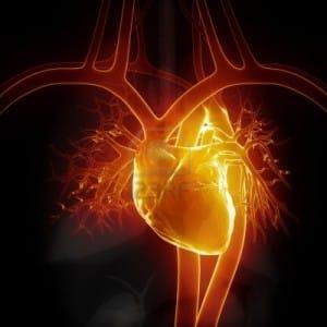 Il cuore respira
