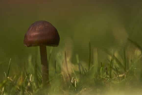 terapie anticancro funghi