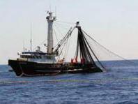 Precisazioni del Mipaaf sul decreto relativo al divieto di pesca del pesce spada