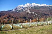 GustoCortina crea il Cortina Wine Club - Vini Estremi