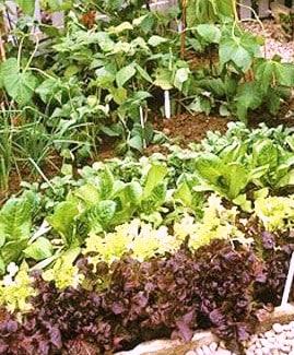 4 ottimi motivi per fare un orto