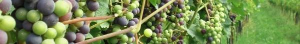 Intervista ai produttori vino Bio a Vinitaly 2013