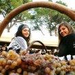44^ Festa dei Vini D.O.C. Gambellara a Selva di Montebello Vicentino