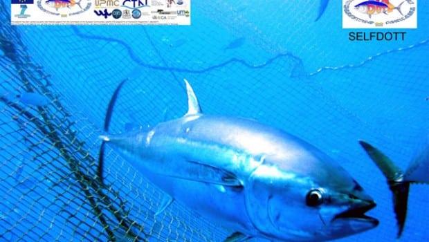 Estinzione del tonno rosso, nati i primi tonnetti di allevamento