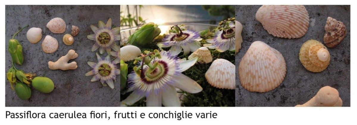 Passiflora caerulea: come fare una composizione floreale