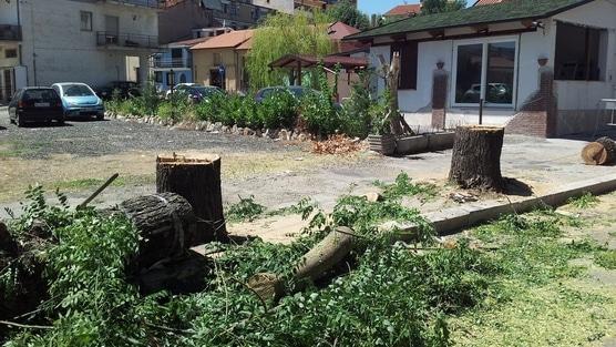 Alberi tagliati ad Avezzano: non se ne poteva proprio fare a meno?
