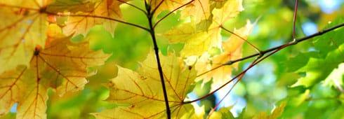 Sfumature d'autunno: luoghi da scoprire con i cinque sensi - BioNotizie.com