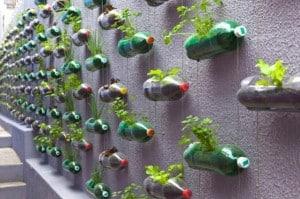 Come coltivare il proprio orto in casa riciclando la plastica