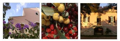 La soia scompare dalla bergamasca. Le previsioni di ABIA sulle semine primaverili