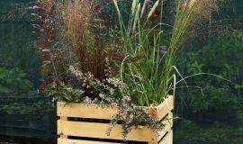 Corsi di giardinaggio al vivaio MondoRose