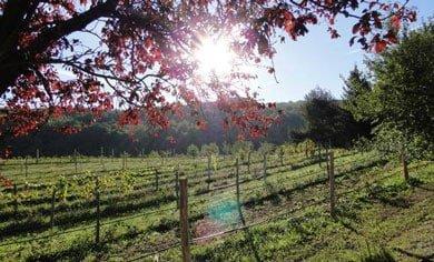 Benvenuti al Parco dei Cento Laghi: polmone verde d'Italia!
