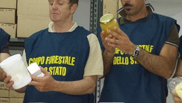Orso morto in Abruzzo: confessa il responsabile per la prima volta in Italia