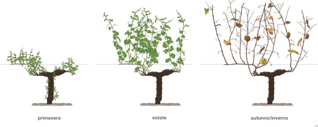 La potatura, come, quando e perché è necessaria