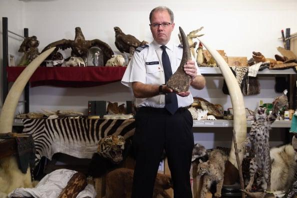 In manette trafficante di corni di rinoceronte a Francoforte, la refurtiva vale 1 milione di dollari
