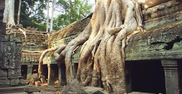 alberi-natura-c
