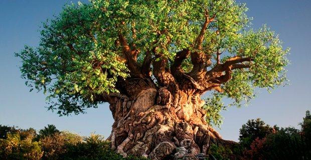 alberi-natura-e