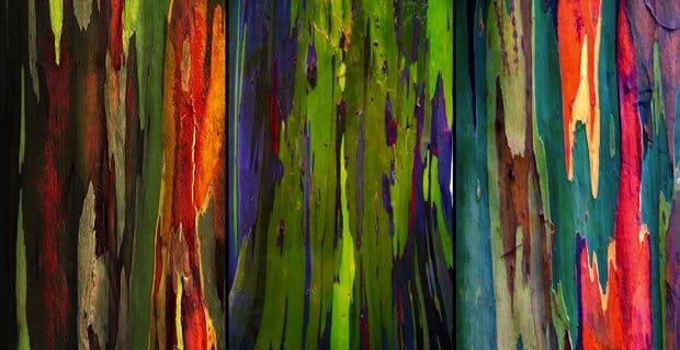 alberi-natura-f