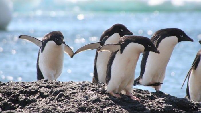 10 animali minacciati dai cambiamenti climatici