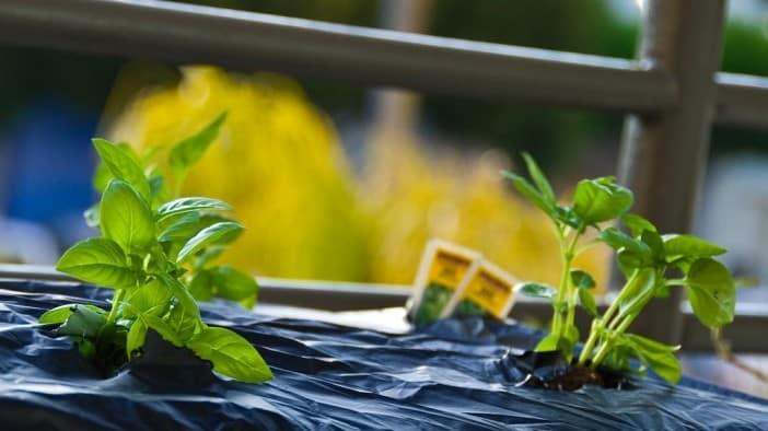 Come risparmiare in casa: 10 consigli per essere più ecologici e più felici