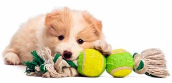 """Giochi per cani da fare in casa: qualche idea utile per """"combattere"""" la noia - BioNotizie.com"""
