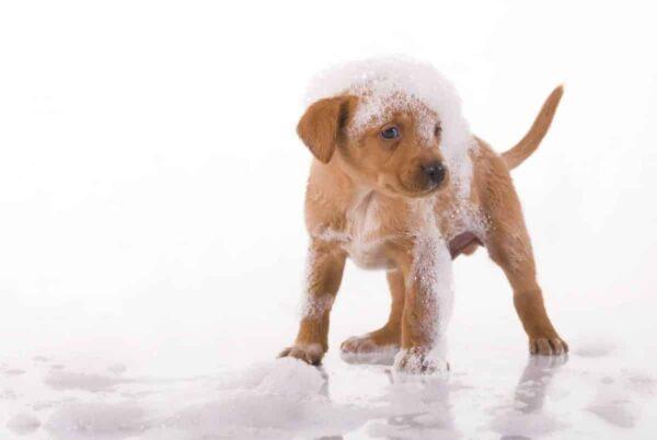 L'importanza della toelettatura per cani: per igiene e pulizia profonda. - BioNotizie.com