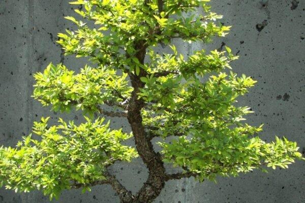 Che cosa sono i bonsai? - BioNotizie.com