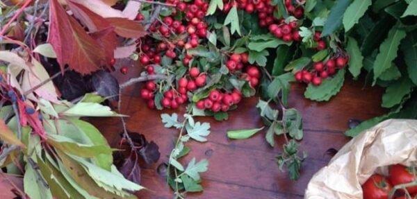 Balcone fiorito: anche in autunno è possibile, ecco come
