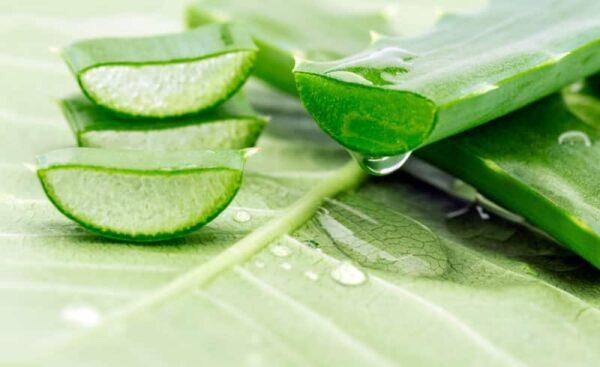 Aloe vera, un rimedio via gel - BioNotizie.com