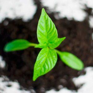 Il futuro della PAC è meno ecologico del previsto