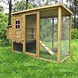 Allevamento domestico galline ovaiole, per uova cruelty free