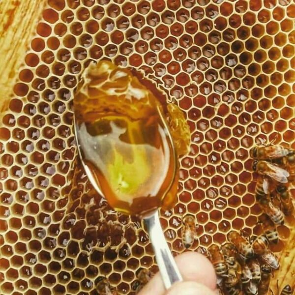Le proprietà del miele artigianale