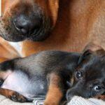 Natural Trainer Puppy: ingredienti naturali per i cani di piccola taglia