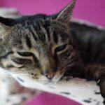 Anche i gatti si ammalano e vanno ko per l'influenza