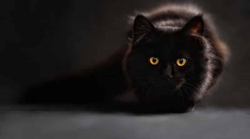 Perché sterilizzare il gatto maschio