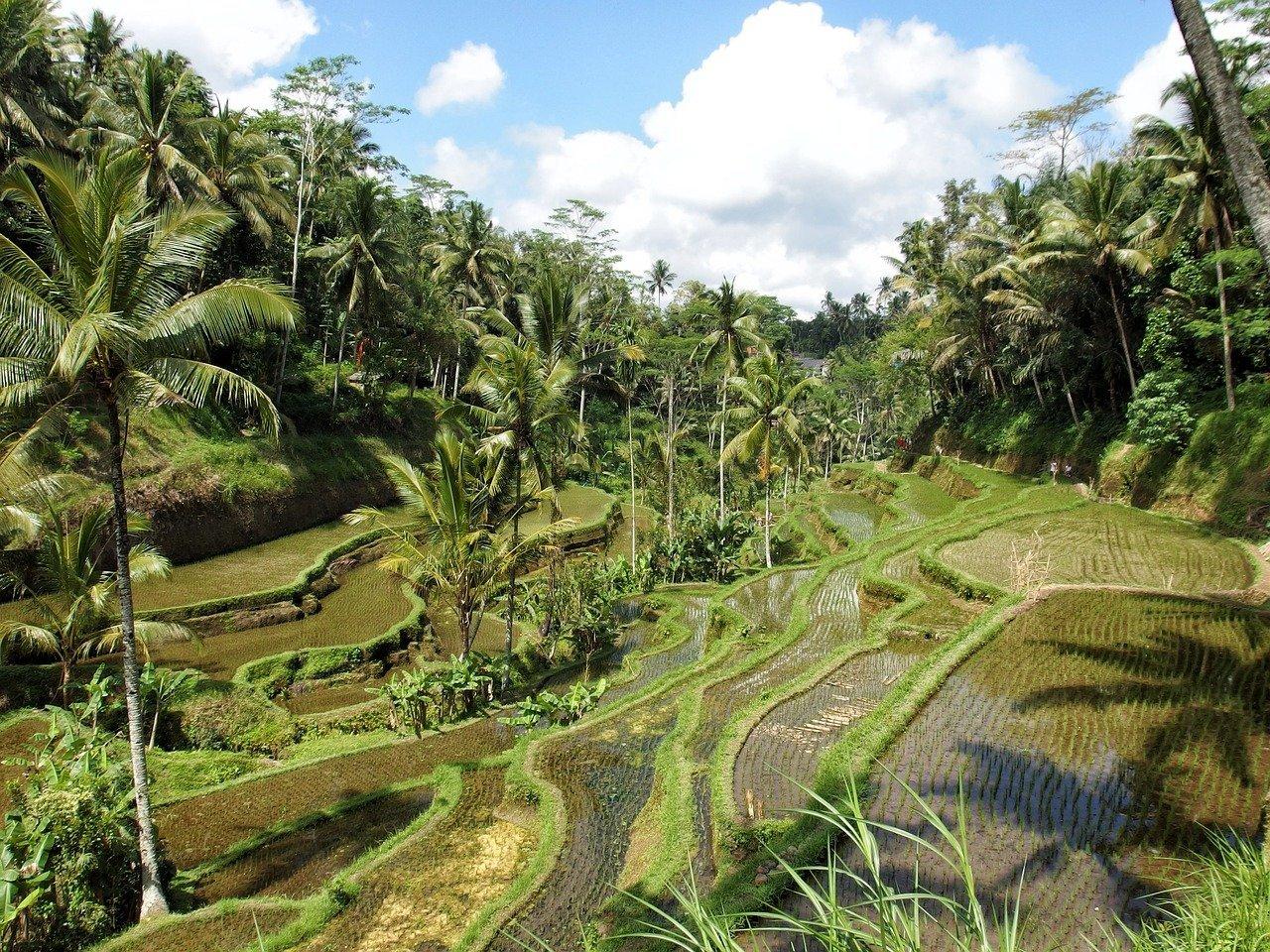 agricoltura biologica per preservare le risorse naturali e garantire la biodiversita