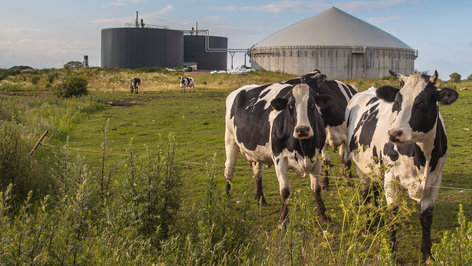 impianti biogas aziende agricole